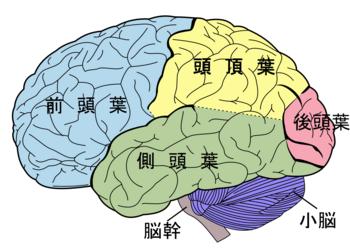 脳断面図.pngのサムネイル画像