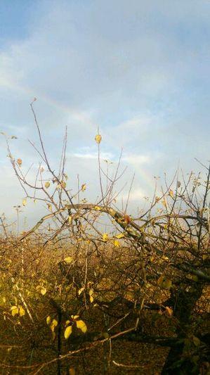 リンゴ.JPGのサムネイル画像