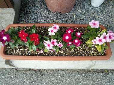 28の花.JPG