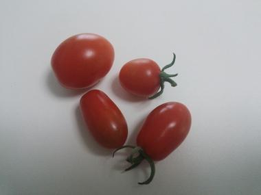 トマト写.JPG